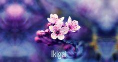 Ikigai- La Propuesta Japonesa Que Te Lleva a Descubrir Tu Razon De Existir
