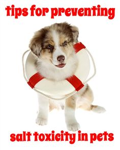 Pet Health Tip: What do homemade playdough, paint balls, rock salt, table salt, enemas and seawater have in common? They can all be sources of salt toxicity for pets
