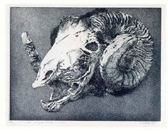 Barry Cleavin New Zealander, The hungry sheep look up - the final solution etching Sheep Skull, Natural Forms, Gravure, Looking Up, Printmaking, Art Gallery, Lion Sculpture, Fine Art, Art Prints