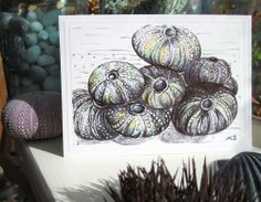 sketch of sea life Art Sketchbook, Under The Sea, Shells, Halloween, Drawings, Life, Home Decor, Conch Shells, Decoration Home