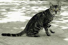 Alert Photography Photos, Explore, Cats, Animals, Gatos, Animales, Animaux, Animal, Cat