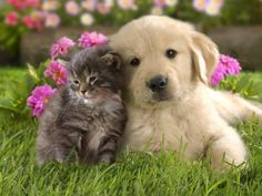 Cat and Dog beautiful
