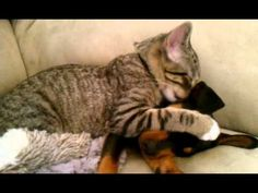This Dog Just Got Back from The Vet. Just Watch How His Kitty Brother Reacts!