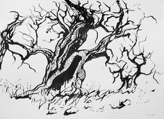 Olive Trees, ink on paper