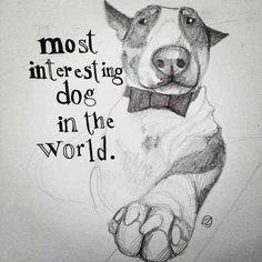 Bull terrier.  Drawing.