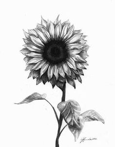 Black And White Sunflower Tattoo Designs Sunflower Tattoos