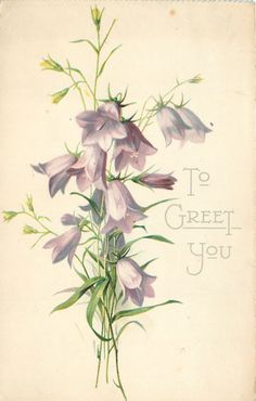 TO GREET YOU  harebells