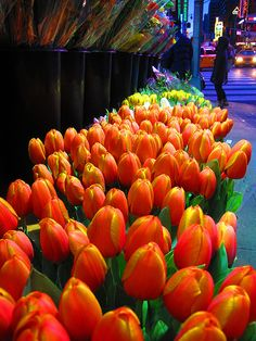 Spring tulips in New York City #Spring #Beauty #Flowers ★ www.facebook.com/EssencetoSuccess