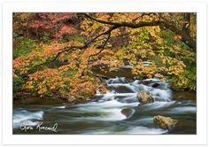 Visited Cherokee National Forest/Blue Ridge Parkway/Gatlinburg in the fall when I was in high school...GORGEOUS!!