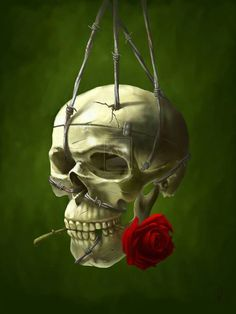 Suspended Skull with red rose clenched between it's teeth.
