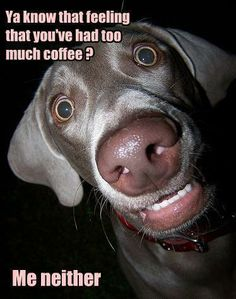 no such thing - Funny pictures and memes of dogs doing and implying things. If you thought you couldn't possible love dogs anymore, this might prove you wrong. Funny Dog Photos, Funny Animal Pictures, Funny Dogs, Funny Animals, Cute Animals, Animal Pics, Dachshund, Baby Dogs, Doggies