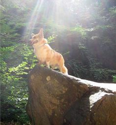 King of the Mountain!