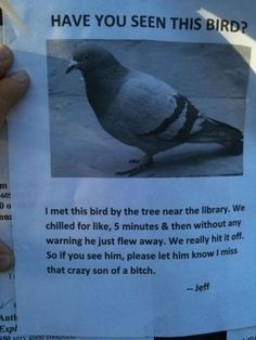 Funny pictures about Have you seen the bird? Oh, and cool pics about Have you seen the bird? Also, Have you seen the bird? I Smile, Make Me Smile, Haha Funny, Funny Stuff, Funny Things, Funny Shit, Funniest Things, Random Stuff, That's Hilarious
