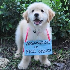 Instagram media life_as_lila - the sign says it all! #goldenretriever