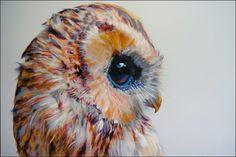 Closeup owl face