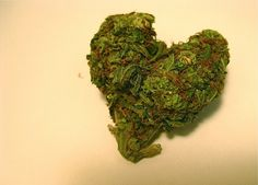 Happy Valentine's: Study Shows Smoking Weed Is Good For Relationships   #cannabis #weed #marijuana #flower #rosin #shatter  #nugrun #strains #sativa #indica #concentrates #CBD  #dab #dablife #hash #THC #wax #joints #kush