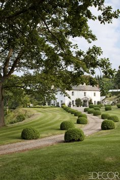 The front drive is lined with boxwood balls the Morrisons planted 25 years ago. - ELLEDecor.com