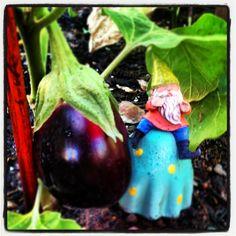 Eggplant :o