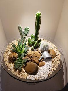 How For Making Your Landscape Search Excellent Terrario Cactus Succulent Arrangements, Cacti And Succulents, Planting Succulents, Cactus Plants, Indoor Cactus, Cactus Art, Cactus Terrarium, Cactus Types, Dish Garden