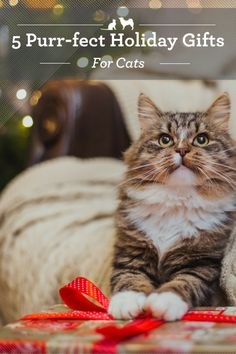 Purr-fect Holiday Gifts for Cats. Great gifts for your cat will promote his future happiness and health. Here are a few Christmas gifts for cats that will give everyone a reason to purr. via @kristenlevine