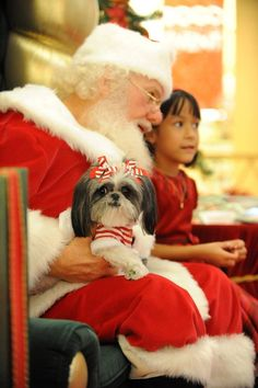 Santa and a shih Tzu!