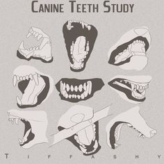 Anatomy notes 6 incisors (front teeth)4 canines/fangs, bottom canines are closer to the incisors than top caninesWolf tongues are floppy and thin, but rough to lick flesh off boneCarnivorous teeth ...