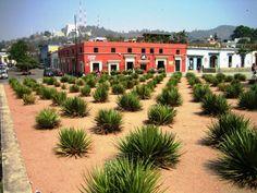 Oaxaca ( Mexico )