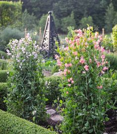 Sweet peas in the foreground softly frame an obelisk in back.