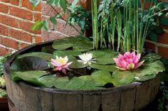 Water-Garden-in-Half-Barrel-John-Glover-rs550