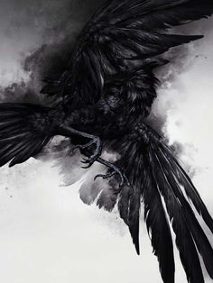 Hope You All Enjoy These 10 Random Colorized Pictures From. Informations About Cool Insects Pin Yo Crow Art, Raven Art, Rabe Tattoo, Cool Insects, Arte Horror, Foto Art, Bird Drawings, Black Art, Beautiful Birds