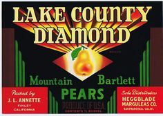PEAR CRATE LABEL SCARCE VINTAGE MOUNTAIN GEMS LAKE COUNTY SACRAMENTO C1950