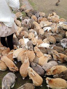 Okunoshima - rabbit island in Japan More