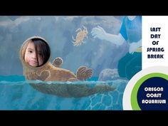 Oregon Coast Aquarium. Watch now!
