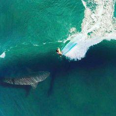 Dronned. Sick shark edit  Imagine being there!  Photo: Evan Adamson
