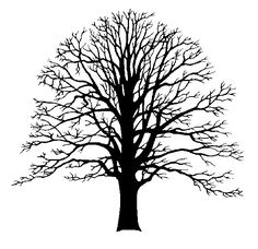 Oak Tree Line Silhouette HD Wallpapers on picsfair.com