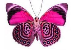 Schmetterlingsflügel. Handgemalte Silk Tanz Flügel