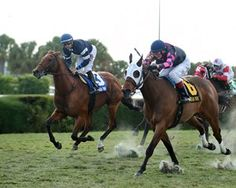 Lubash Awarded Tropical Turf Victory. Having amassed 17 victories and $1.4 million in earnings during a 50-race career, Lubash (9 years old) was the most experienced and accomplished horse that went to post Nov. 26, 2016 for the 100,000 Tropical Turf Handicap (gr. IIIT) at Gulfstream Park West.