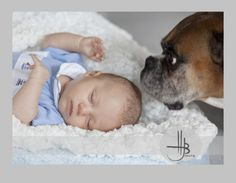 boxer dog and newborn baby photograph by heidi brady of hjb dog and puppy photography