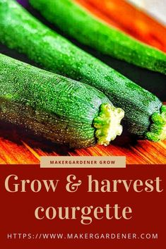 Growing and harvesting courgette. It requires a nice warm season to grow otherwise it would not grow at all. One plant is more than enough as it can produce a glut. Source by makergardener Growing Vegetables At Home, Kinds Of Vegetables, Organic Vegetables, Veggies, Growing Courgettes, Organic Gardening, Gardening Tips, Backyard Vegetable Gardens, Grass Seed