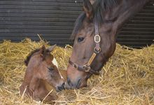 Danedream with her filly foal by Frankel