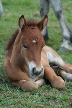 """Precious! Just like the little quarter horse, filly, I had...""""Baby""""!"""