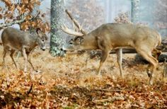 The 7 Deadly Sins of Whitetail Hunting | Jim Collyer