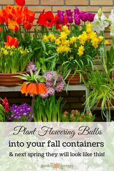 Take a little time now to plant up some large containers as fall bulb planters that will flower next spring, You will be pleased as punch that you did!