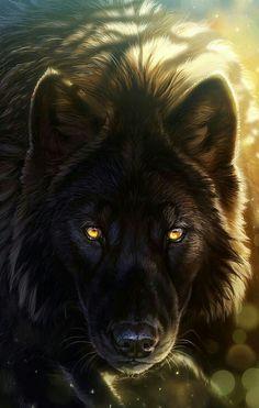 Stunning Wolf!