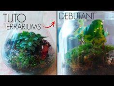 Aquarium Terrarium, Terrariums, Instagram, Atelier, Terrarium, Terraria