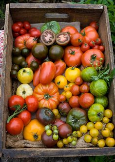 My Homemade Life: Summer is HERE! HEIRLOOM TOMATOES