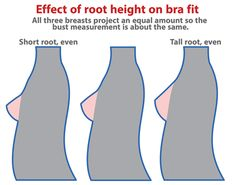 Breast Roots_short vs tall.png