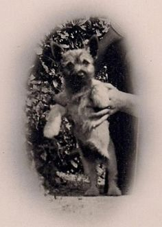 Cute Little Terrier Held Aloft by Disembodied Hands~Sweet Vintage Dog Photograph