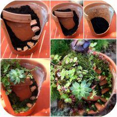 Fairy garden in a broken pot with succulents.