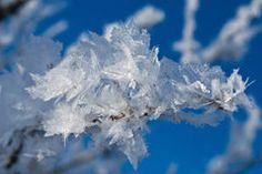 Hoar Frost on Tree Branch Stock Photo Winter Light, Photo Link, Professional Photography, Tree Branches, Frost, Mary, Clouds, Stock Photos, Outdoor
